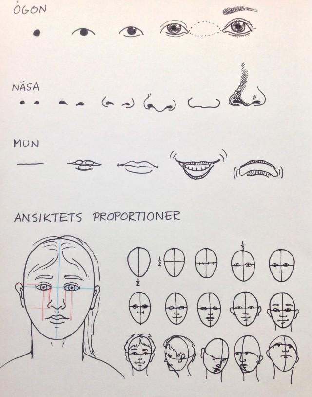 Ansiktets proportioner ochdetaljer.